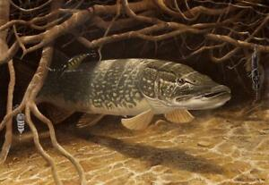"""Superb River fishing Art print """"Pike in the Roots"""" by David Miller Signed copy"""