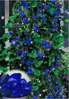 1000pcs Blue Climbing Strawberry tree very delicious Fruit Seeds For Home & Gard
