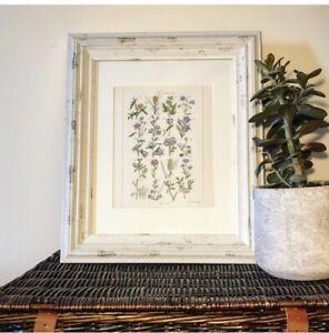 X4 Vintage Botanical Flower Art Prints Lithographs Illustrations