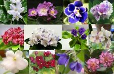 ~African Violet *Assorted Leaves* Standards-Semi's-Minis!  2-$6