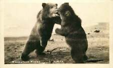 Real Photo Postcard Grizzly Bears Fighting in Alaska - A Wrestling Match
