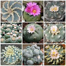 30 graines de Lophophora mèlanges,plantes grasses, cactus seeds mix , F