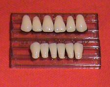 1 New Set Of Anterior Three Layer Dental Acrylic Resin Teeth Shade A3 Size 23