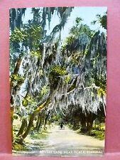 Postcard FL Ocala Lovers Lane on Silver Spring Road
