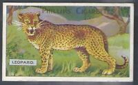 PHILLIPS-ANIMAL SERIES 1903-#26- LEOPARD