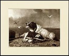 "NEWFOUNDLAND ""SAVED"" CLASSIC SEPIA DOG PRINT MOUNTED READY TO FRAME"