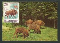 ROMINA MK 1977 FAUNA BISON WISENT MAXIMUMKARTE CARTE MAXIMUM CARD MC CM d9298