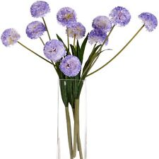 Lavender Pompom Dahlias - Pompon Wonderful Addition Home