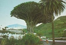 "*Tree Postcard-""Milleary Drago Tree With the Teide as Background"" (U2-202)"