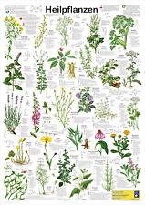 """Bio-Poster """"Heilpflanzen"""""""