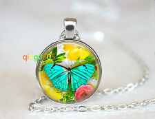 Exotic Butterfly photo glass dome Tibet silver Chain Pendant Necklace wholesale