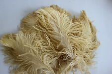 10 old gold first A grade ostrich wing plumes 28-35 cm (11-14 inch )