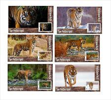 Tiger Tigers Wild Cats Cat 6 Souvenir Sheets Mnh Unperforated Animals Fauna