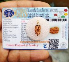 Rare 1 Mukhi Rudraksha / One Face Rudraksh Java Bead Lab Certified Size 10-12 MM