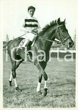 1939 MILANO Ippica Cavallo ISOLETTA vince Premio TURISMO *Fotografia