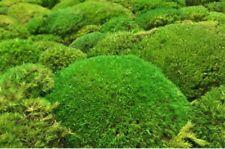 1 qm Kugelmoos echtes frisches Moos kaufen für Moosgarten Garten Grab Friedhof