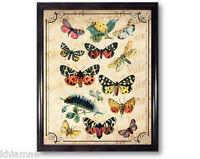 Vintage Butterflies Dictionary Art Print 10 x 8 butterfly catapillar bugs nature