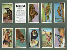 TRADE/ Tobacco cards set Wild Wisdom in Africa, Witch Dr, Elephants, flamingo