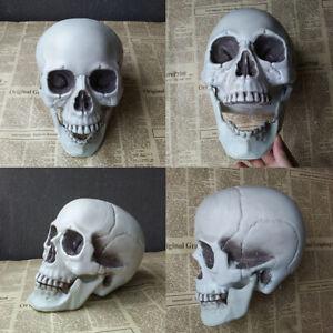 Halloween  Artificial Skull Head Model Skull Bone Scary Horror Skeleton OrnamePT