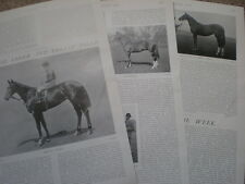 Photo article horse racing star Pretty polly 1904