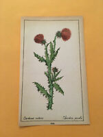 KT) 1878 Botanique Pratique Carduus Notans Flower Botany Original Colored Print