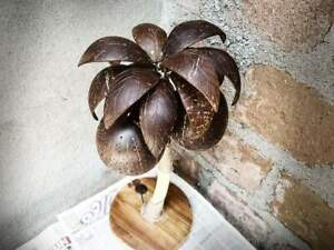 Natural Coconut Table Lamp Shell Palm Tree Night Light Shades Wood Art Rooms
