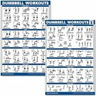 """2PK Dumbbell Workout Exercise Posters Free Weight Body Building Charts 18""""x27-US"""