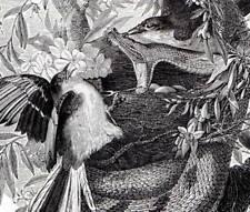 La serpiente de cascabel Original Buffon antiguo grabado impresión de Historia Natural