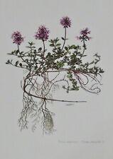 Ancienne Affiche Poster Art Print A3 Botanique Pl 125 Thym Serpolet Pouliot