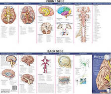 Anatomical Chart Company's Illustrated Pocket Anatomy: Anatomy of the Brain Study Guide by Lippincott Williams and Wilkins (Fold-out book or chart, 2007)
