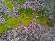 Live Fresh Organic Ozark Woodland Moss