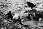 WWII photo Raven sitting on the body of a murdered German soldier 73