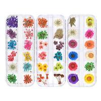 Multi Color Nail Art 3D Decoration Real Dried Dry Flower Petals Coral Set + Box
