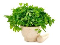 Home Garden - Leaf parsley variety mix - for indoor and - 3000 seeds