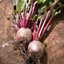 100pcs vegetable Seeds Red Beetroot (Beta vulgaris)