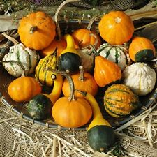 Gourd Small Mix Vegetable Seeds (Cucurbita pepo) 25+Seeds