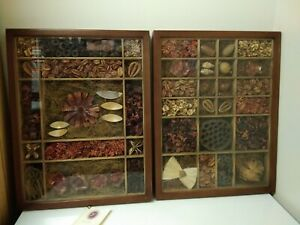 Exotic Natural World Seeds Collection Display Cases X 2 Wall Hanging Framed