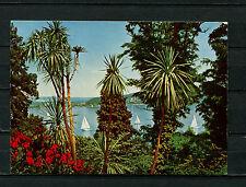 Isla Mainau-Dracaena grupo (bw62)