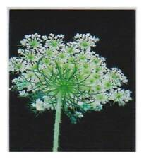Magnetic bookmark - Queen Ann's Lace
