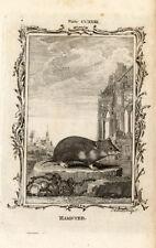 Antique Print-HAMSTER-RODENT-Bell-Smellie-Buffon-1785