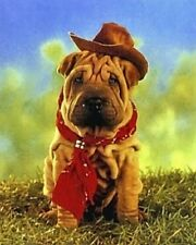 SHAR PEI CHINESE DOG ART PHOTO POSTER PUPPY PRINT
