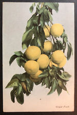 Grape Fruit California printed advertiser for California Fruit Products Colton