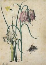 Postkarte: Flegel - Iris, Narzisse, Schachbrettblume u. Hornisse