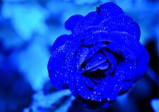 Azul Rosas Pegatinas de Vinilo Coche Furgoneta Camión Taxi Camión Flores De Amor