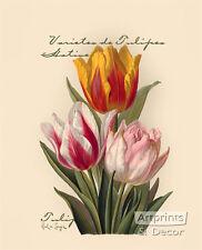 Tulips by Paul de Longpre (Art Print of Vintage Art)
