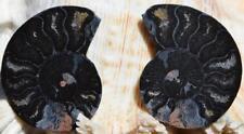 1136 RARE 1 in 100 BLACK Ammonite PAIR Deep Crystals MEDIUM FOSSIL 22grams 43mm