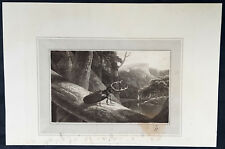 1809 William Daniell Antique Print of The Stag Beetle