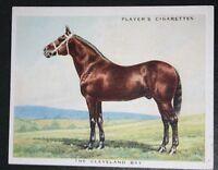 Cleveland Bay    Coach Horse  Superb 1930's Vintage Card  VGC