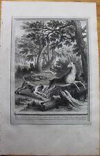 Oudry, Fables de la Fontaine, 1755-1783, LE CORBEAU, LA GAZELLE ETC... F:228