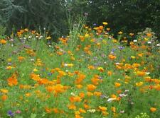 FLOWER SEED - 1 PACK COVERS UP TO 400 SQ METRES! - EASY TO USE - FREE DELIVERY!!